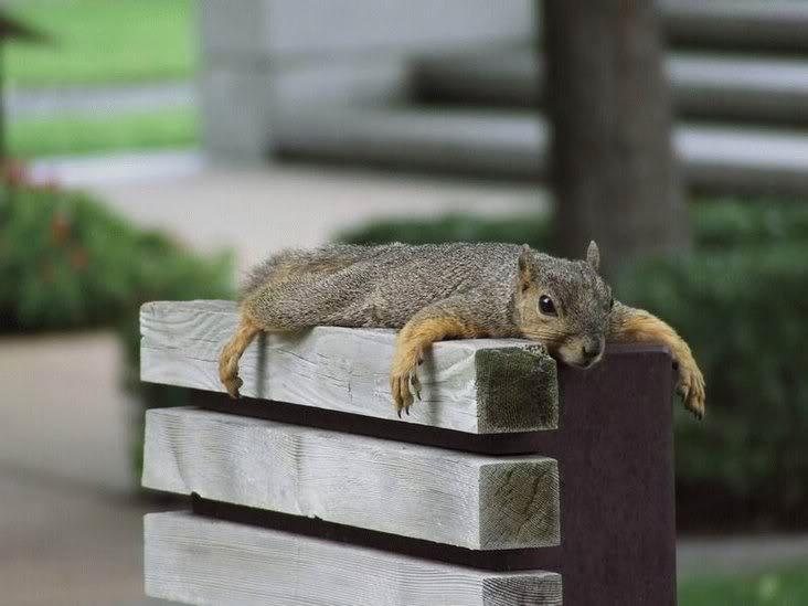 tiredsquirrel