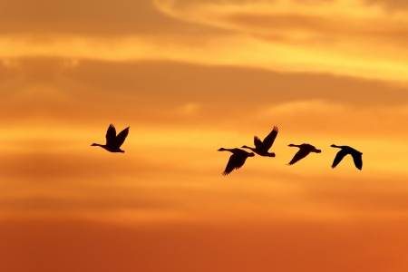 follow-birds