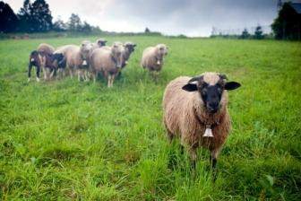 15053844 - herd team leader